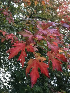 Autumn 3 250918